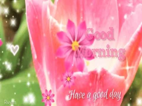 Good Morning Status Video Good Morning Whatsapp Status Video Good Morning Love Status Status143 Com