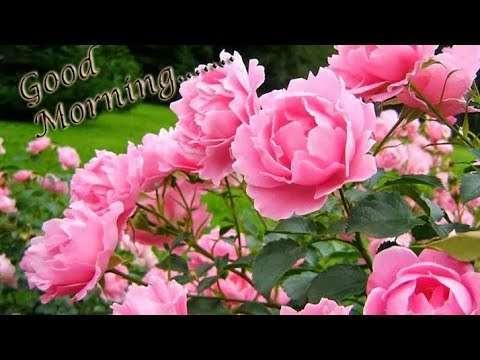 Morning song status | Love morning status | good morning status | lovely morning status