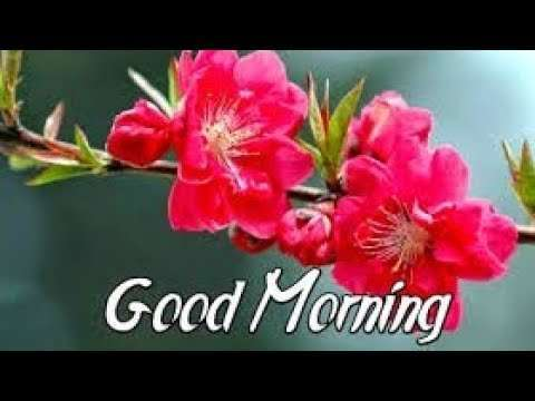 morning status |love morning whatsapp status video | whatsapp status | good morning love you